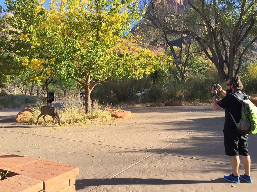 A hiker in Zion National Park snaps a closeup picture of a deer roaming through the park. Photo by Trey Davis.